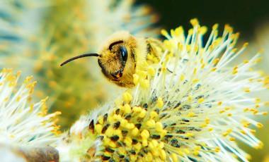 alles-over-bijen