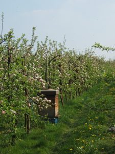 Bijenkast in het fruit